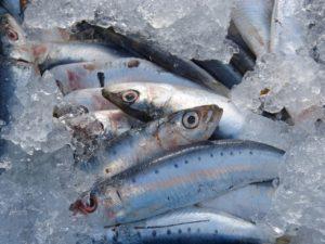 sardines, fresh fish, fresh sardines